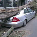 fallen-tree-1088514_1920